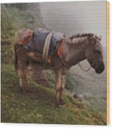 Colombian Burro In The Fog Wood Print