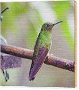 Colombian Hummingbird Wood Print
