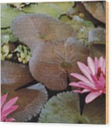 Colombian Pink Lillies Wood Print