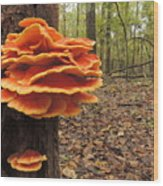 Color In The Woods Wood Print
