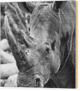 Color Me Rhino Wood Print