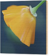 Color Of Love Wood Print