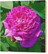 Color Of Rose Wood Print