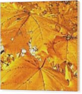 Color Of The Leaves Wood Print