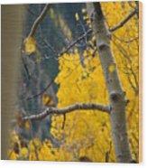 Colorado Aspen In Fall Wood Print