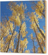 Colorado Aspen Wood Print
