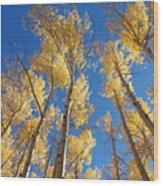 Colorado Aspen Wood Print