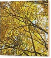 Colorado Aspens In Fall Wood Print