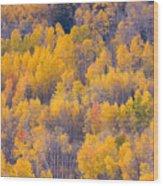 Colorado Autumn Trees Wood Print