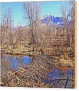 Colorado Beaver Ecosystem Wood Print