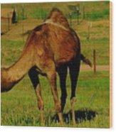 Colorado Camel  Wood Print