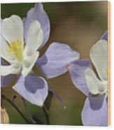 Colorado Columbine #1 Wood Print