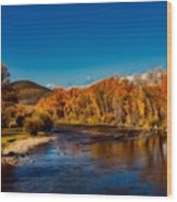 Colorado Cottonwoods In Autumn Wood Print