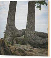 Colorado Entanglement Wood Print