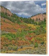 Colorado Fall Colors 1 Wood Print