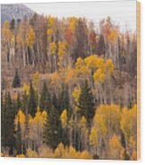 Colorado Fall Foliage Wood Print