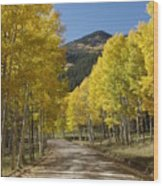 Colorado Fall Splendor Wood Print