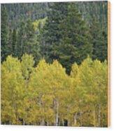 Colorado Golden Aspens Wood Print