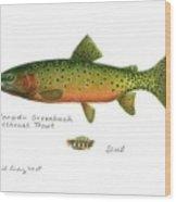 Colorado Greenback Cutthroat Trout Wood Print