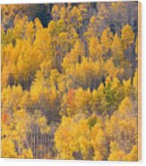 Colorado High Country Autumn Colors Wood Print