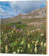 Colorado Late Summer Splendor Wood Print