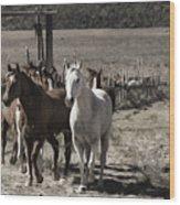 Colorado Run Wood Print