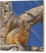 Colorado Squirrel Standoff Wood Print
