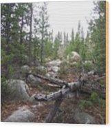 Colorado Trees Wood Print