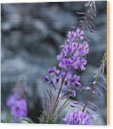 Colorado Wildflower Wood Print