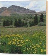Colorado Wildflower Spectrum Wood Print