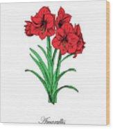 Colored Amaryllis. Botanical Wood Print
