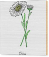 Colored Daisy. Botanical Wood Print
