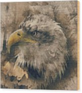 Colored Etching Of American Bald Eagle Wood Print