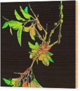 Colored Leaves Wood Print