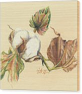Colored Pencil Cotton Plant Wood Print