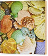 Colored Shells Wood Print