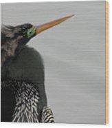 Colorful Anhinga Wood Print