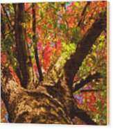 Colorful Autumn Abstract Wood Print by James BO  Insogna