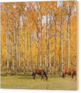 Colorful Autumn High Country Landscape Wood Print
