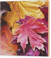 Colorful Autumn Leaves Closeup Wood Print