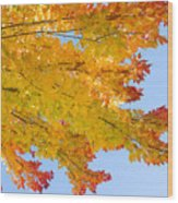 Colorful Autumn Reaching Out Wood Print by James BO  Insogna