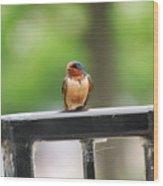 Colorful Bird On Railing Wood Print