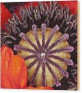 Colorful Bloom Wood Print