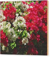 Colorful Bougainvilleas Wood Print