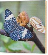 Colorful Butterflies Wood Print