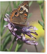 Colorful Butterfly On Daisy Wood Print