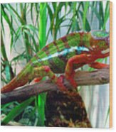Colorful Chameleon Wood Print
