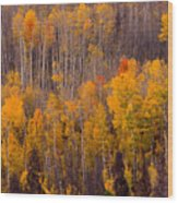 Colorful Colorado Autumn Landscape Vertical Image Wood Print