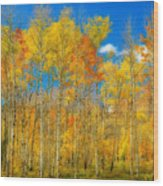Colorful Colorado Fall Foliage Wood Print