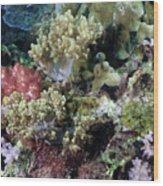Colorful Coral Reef Wood Print